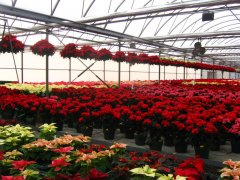 Growing_in_the_Greenhouse.jpg